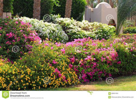 tropical garden flowers tropical garden flower fence stock photo image 69931004