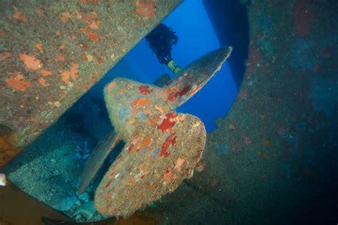 orange shark orangeshark diving centres in malta my guide malta