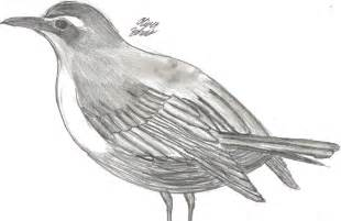 bird pencil drawings and sketches