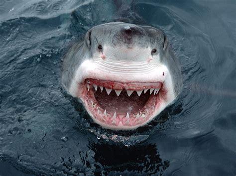 Kitchen Nightmares Long Island Megalodon Shark Life Of Sea