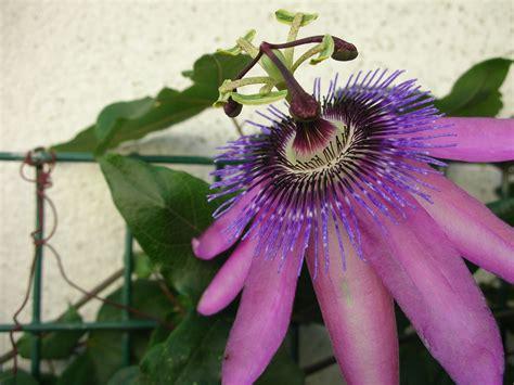 nome di fiore il nome dei fiori storia leggenda oltre il giardino