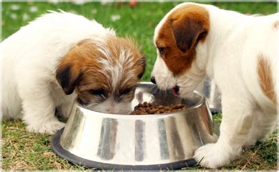 dog food quiz: how much do you know about feeding your dog?