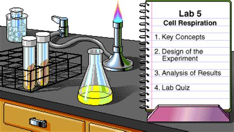 lab bench cellular respiration pearson the biology place