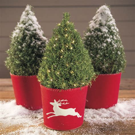 fragrant christmas tree last minute gift guide for home and garden