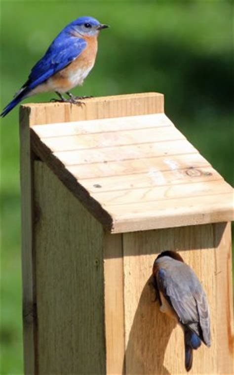 audubon bird house plans audubon bird house plans audubon bluebird house plans 187 woodworktips woodwork