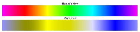 colors we can t see fido and the rainbow siowfa12 science in our world