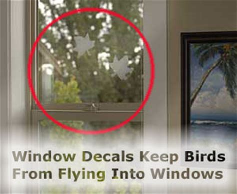 stop birds flying into window video search engine at