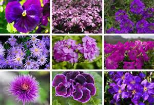 Purple Garden Flowers 25 Purple Flower Ideas For Your Garden Pots And Planters