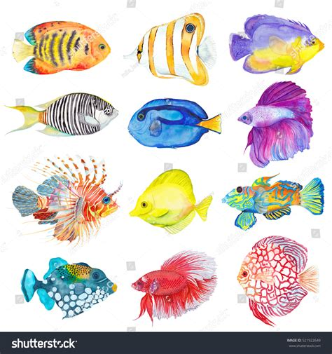 Colorful Set watercolor colorful set fishes angelfish stock illustration 521922649