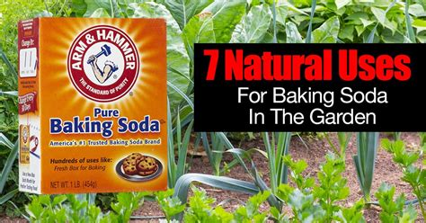 killing crabgrass with baking soda tips 7 uses for baking soda in the garden the