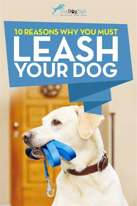 leash your puppy 10 reasons to leash your top tips