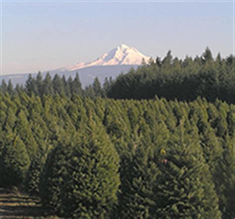 christmas tree farm in oregon clackamas county tree farms the complete pilgrim religious travel