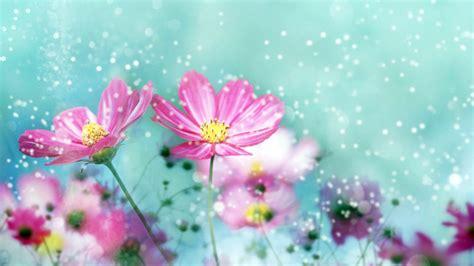 imagenes de rosas maravillosas maravillosas im 225 genes de flores taringa