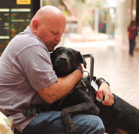 veterans therapy act new bill shelter dogs for veterans with ptsd taildom