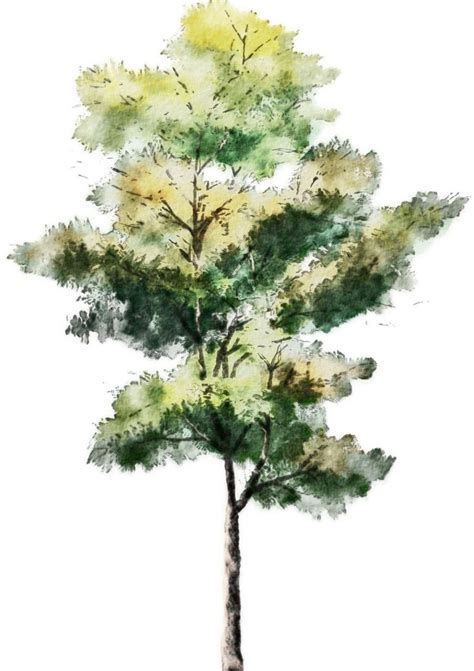 b tree drawing tool 43 best vegetaci 243 n png images on landscaping