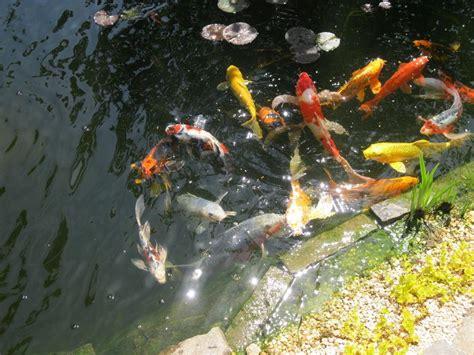 Backyard Fishpond Philippines by Triyae Backyard Fish Pond In The Philippines