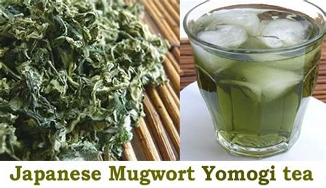 Japanese Detox Diet by Japanese Traditional Mugwort Yomogi Herbal Tea For Detox