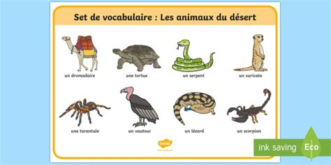 Sheet Reviews by Desert Animals French Word Mat Animals Desert Word Mat