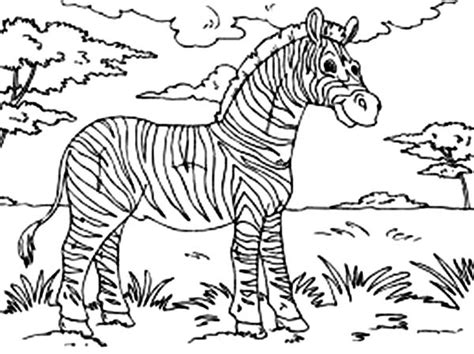 blank zebra coloring page search results for volcano printable model blank