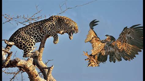 Leopard Bird leopard bird in tree