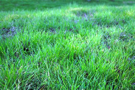 what is spring a quick guide to spring lawn care in jacksonville fl