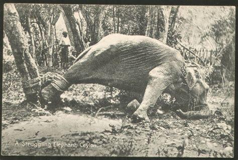 Ceylon Srilanka vintage post cards of sri lanka ceylon elephants