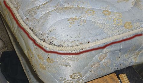 bed bugs on mattress qpm pest control fumigation and extermination services