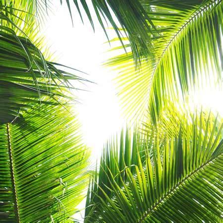 Sichtschutz Garten Pflanzen 106 by Textile Pflanzen Sch 246 Ner Garten
