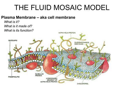 fluid mosaic model aka cell membrane plasma membrane