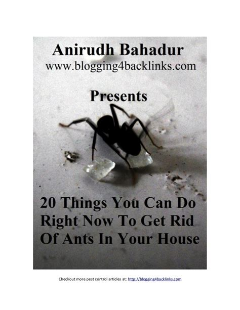 How To Kill Ants In Your House by 20 Things You Can Do Right Now To Get Rid Of Ants In Your