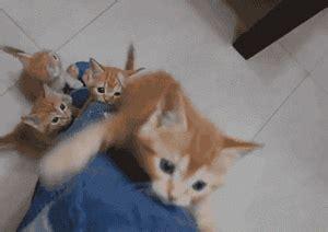 gatitos traviesos gifs animados de gatitos gifmania
