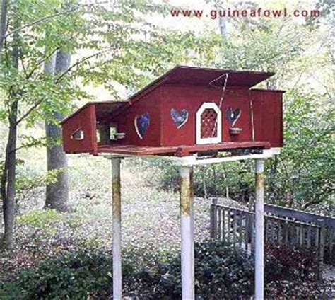 guinea fowl housing 1000 images about backyard homestead on pinterest root