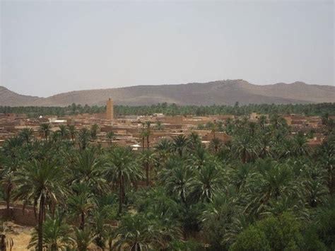 palma da giardino pianta di palma piante da giardino le tante variet 224 di