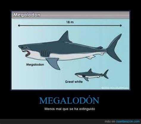 imagenes reales de un megalodon 161 cu 225 nta raz 243 n megalod 211 n