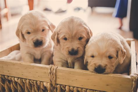 theme names for litter of puppies pads puppies named yvr