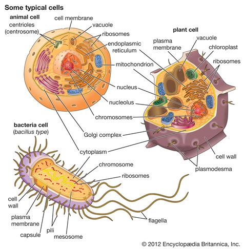 cell  computer cell biology notes plant cell cell
