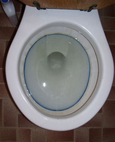 water ring toilet bowl toilet rings no not a new fashion jewelry piece 187 guru