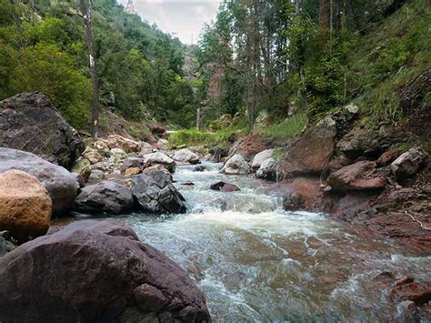 and fish nm gila trout recovery angling new mexico department of