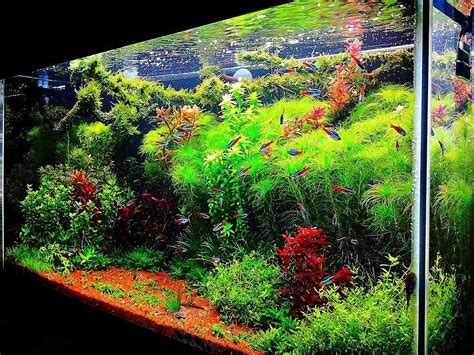 aquascape fish tank home design architecture aquascape aquarium designs diy