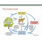 Decomposition Carbon Cycle The Role Of Micro Organisms In