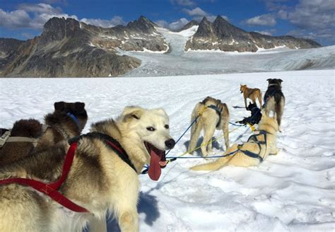 alaskan sled dogs skagway dogsled glacier flightseeing helicopter tour
