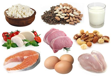 protein rich foods bodybuilding nutrition protein bodybuilding wizard