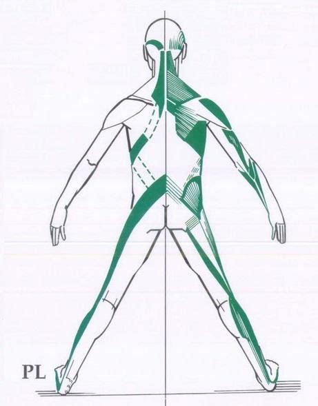 cadenas musculares de gds an 225 lisis de la postura corporal a trav 233 s de las cadenas