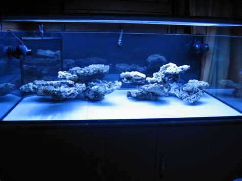 saltwater aquarium aquascape reef aquascaping buscar con google saltwater