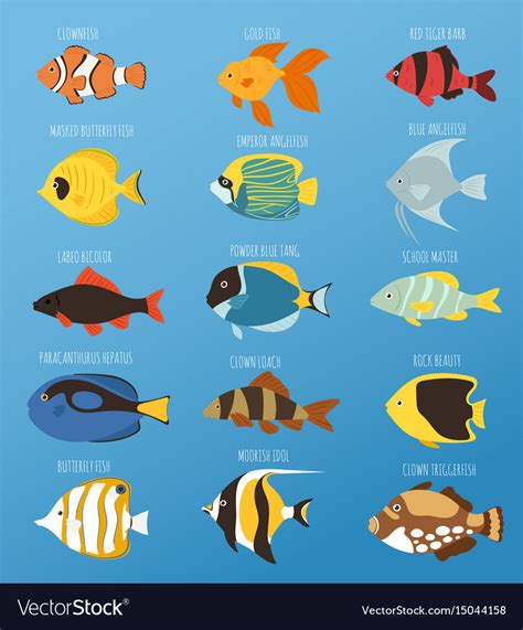 fish colors tropical fish race different breed colors vector image