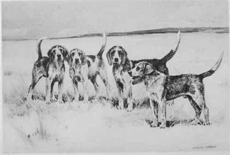 how to a hound to hunt hound drawing