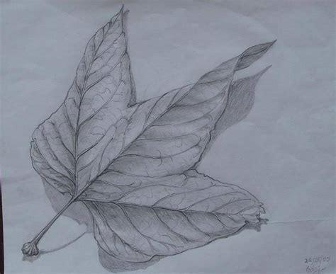 imagenes figurativas a lapiz dibujos de naturaleza a lapiz imagui
