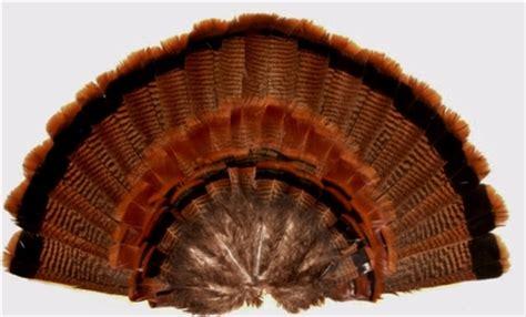 turkey fan mount template turkey decoy fan eastern turkey