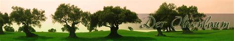 olivenbaum schneiden wann olivenbaum schneiden olivenb 228 ume beschneiden anleitung