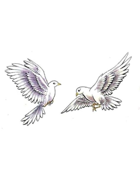 turtle dove clipart flight sketch pencil and in color